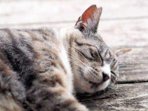 猫、寝る、疲れる、ネコ
