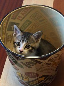 ゴミ箱の中に入る猫、ごみ箱