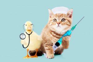 注射、医者、医療、病気