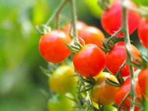ミニトマト、プチトマト、野菜、家庭菜園