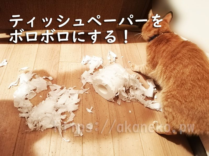 猫のイタズラ、ねこ