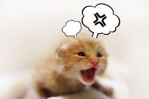 怒る、怒り、ストレス、叫ぶ、パニック、叫ぶ