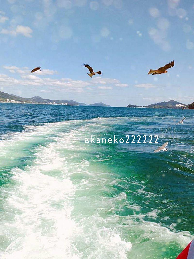 日本海と、水鳥