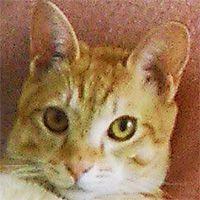 亡くなった猫のマイケル