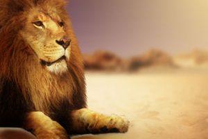 ライオン、オス、雄、男、男性、おとこ、動物