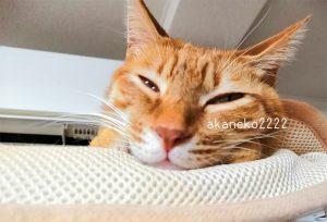 茶虎猫の写真