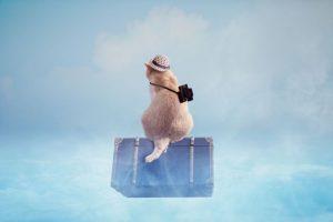 旅行、トラベル、トランク、旅行バッグ、トラベルバッグ、旅に出る猫