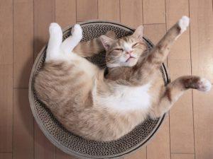 猫、ねこ、ネコ、寝る、寝相、はみ出る、多動
