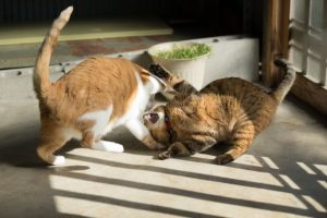 猫の喧嘩、ねこのケンカ、キャットファイト